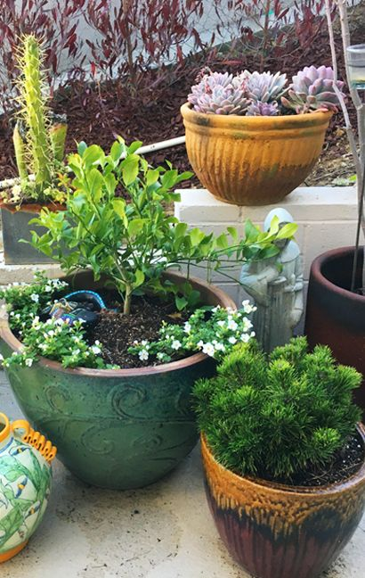Plants for your Patio
