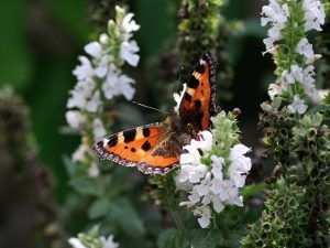 How to get more wildlife into your garden