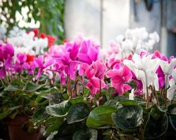 How To Keep Your Garden In Top Shape In November