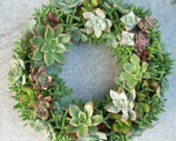 Succulent Wreath Kit 12 inch diameter from Succulent Salon
