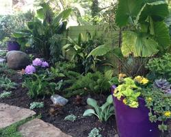 Purple planters highlight the colorful shade garden
