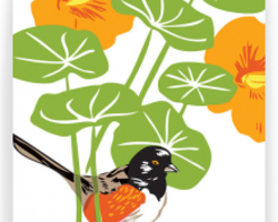 Nasturtiums and Spotted Towhee: Box of 8 A2 folding blank cards from Drenculture