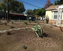 Agaves and Crop Circles(?) in a sea of dirt. Where's the mulch?